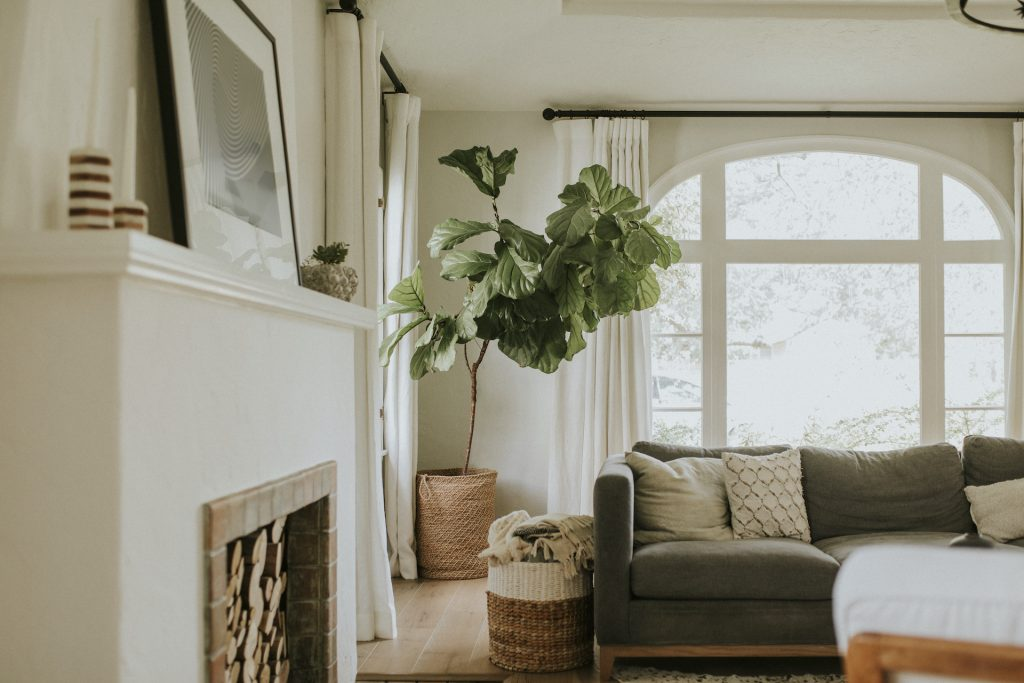 Plants and real estate